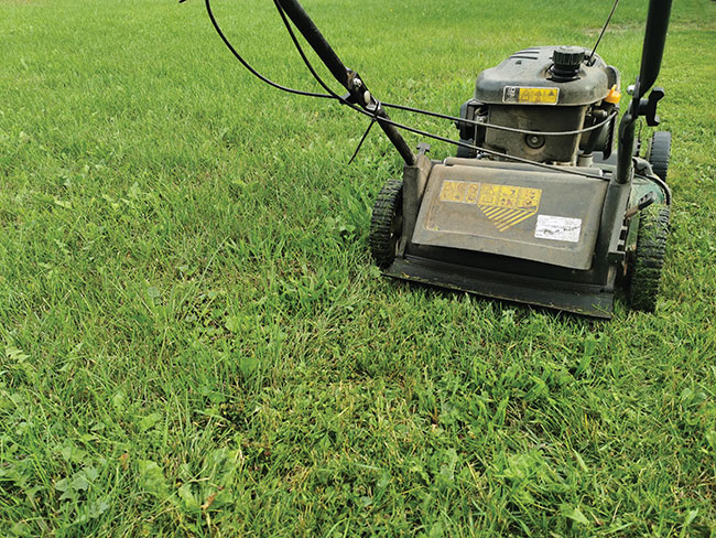 Simple solutions to remedy common lawn care problems